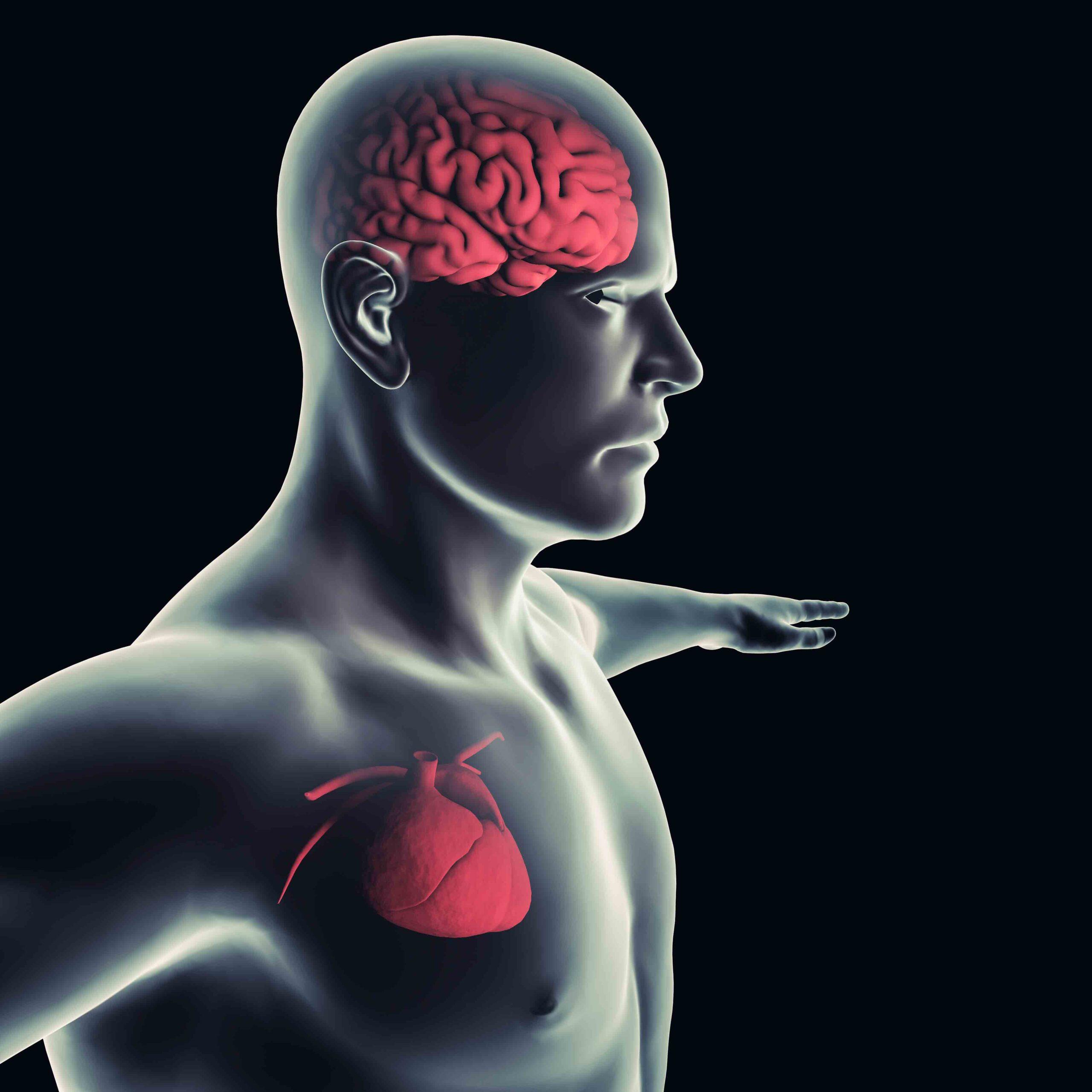 Kopf-Herz-Verbindung